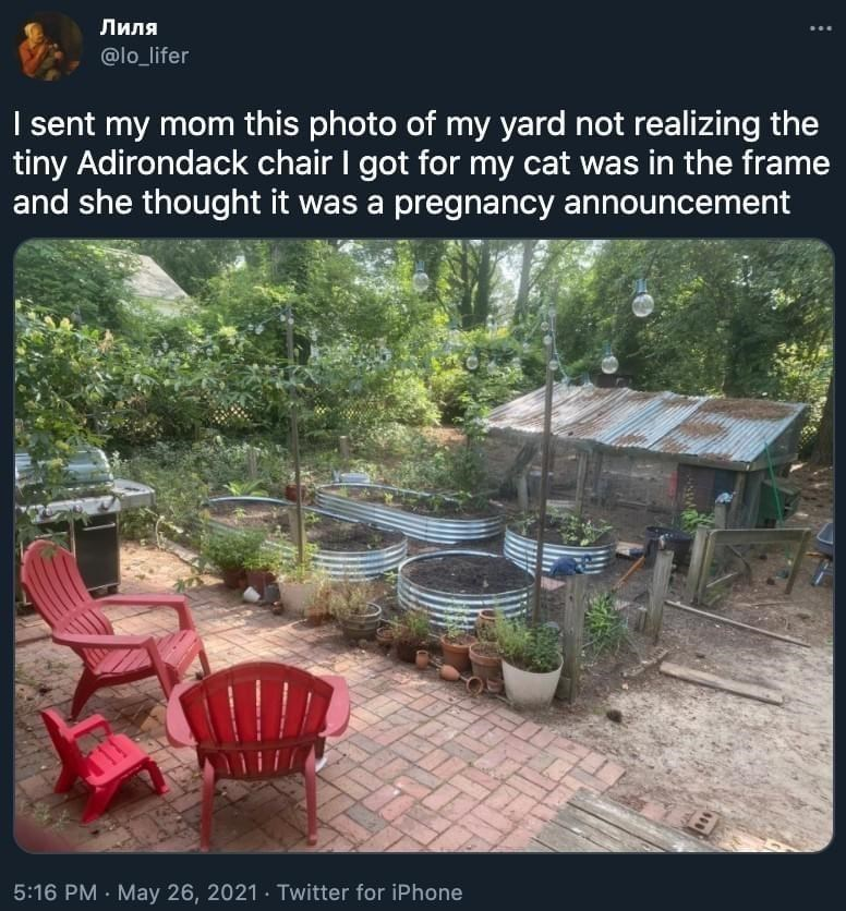 Plant - Лиля @lo_lifer I sent my mom this photo of my yard not realizing the tiny Adirondack chair I got for my cat was in the frame and she thought it was a pregnancy announcement 5:16 PM · May 26, 2021 Twitter for iPhone