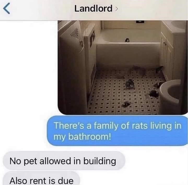 Product - Landlord > There's a family of rats living in my bathroom! No pet allowed in building Also rent is due レ