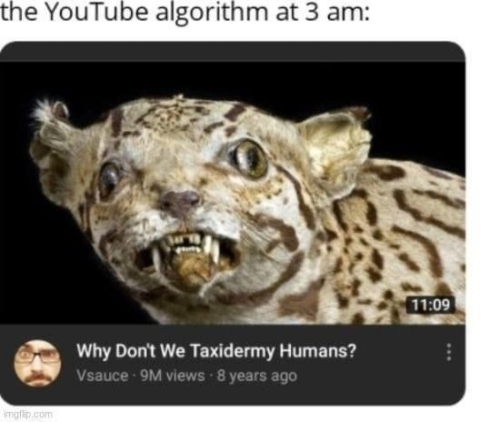 Photograph - the YouTube algorithm at 3 am: 11:09 Why Don't We Taxidermy Humans? Vsauce 9M views 8 years ago imgflip.com