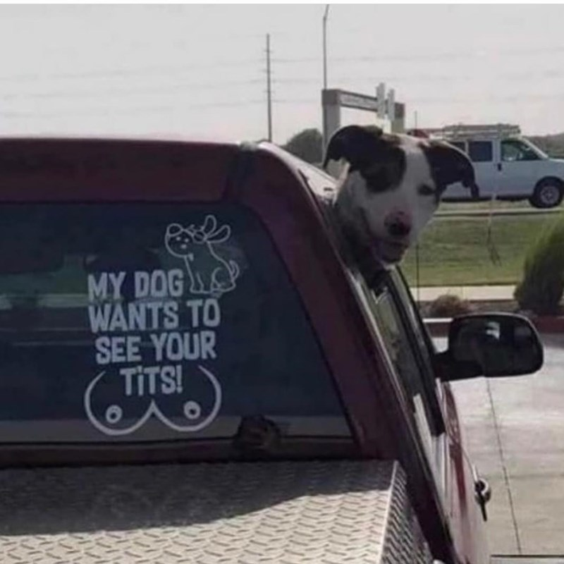 Car - MY DOG WANTS TO SEE YOUR TITS!