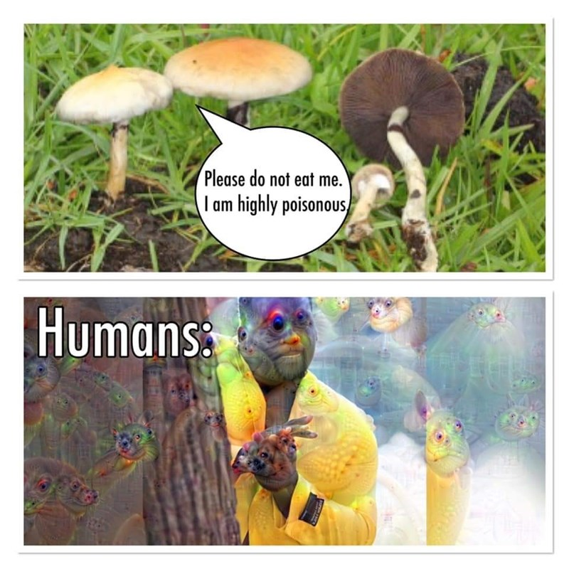 Photograph - Please do not eat me. I am highly poisonous Humans: LATEMAN
