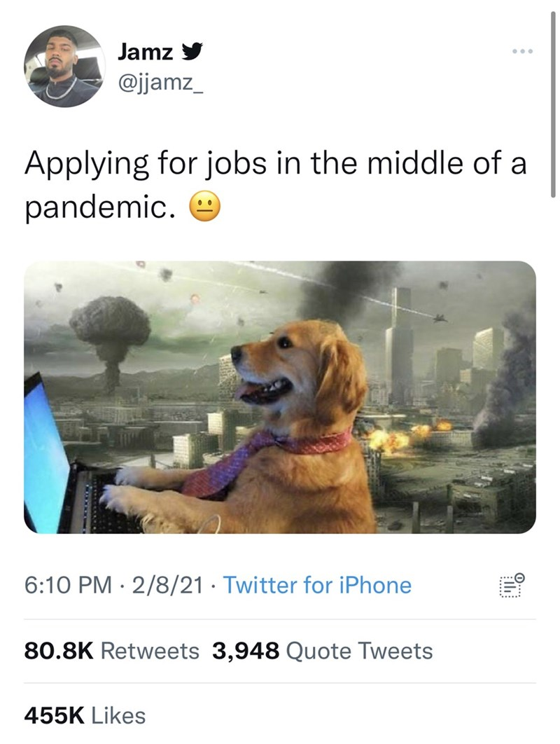 Dog - Jamz y @jjamz_ Applying for jobs in the middle of a pandemic. 6:10 PM · 2/8/21 · Twitter for iPhone 80.8K Retweets 3,948 Quote Tweets 455K Likes