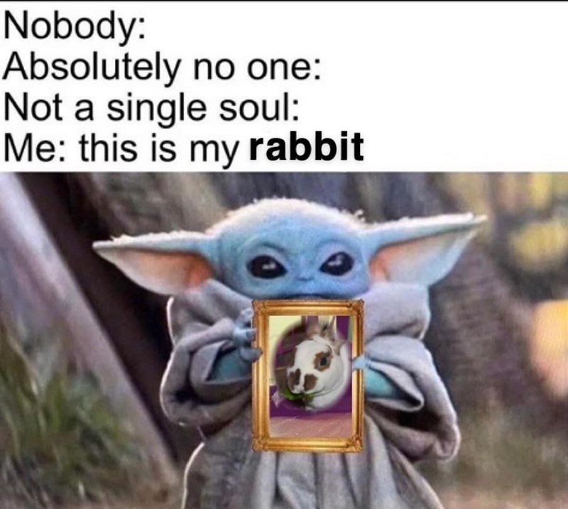 Product - Nobody: Absolutely no one: Not a single soul: Me: this is my rabbit
