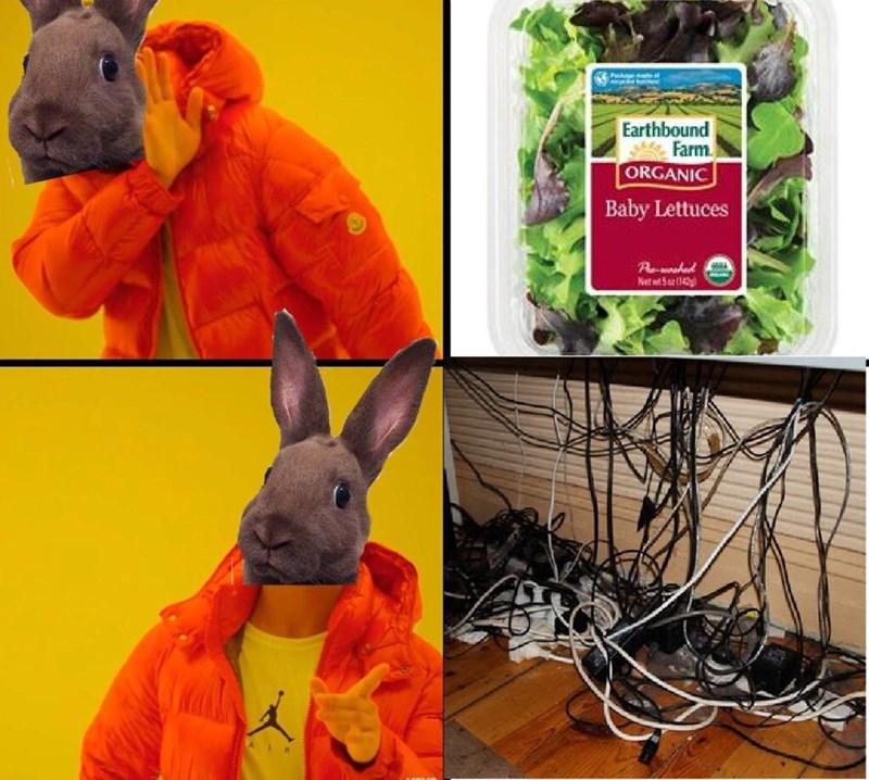 Vertebrate - P Earthbound Farm. ORGANIC Baby Lettuces