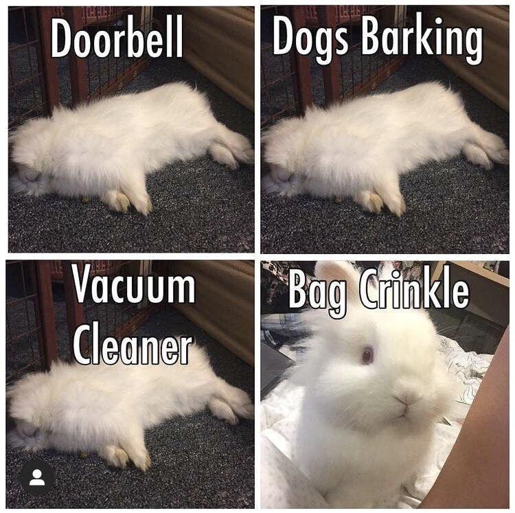 Vertebrate - Doorbell Dogs Barking Vacuum Cleaner Bag Crinkle