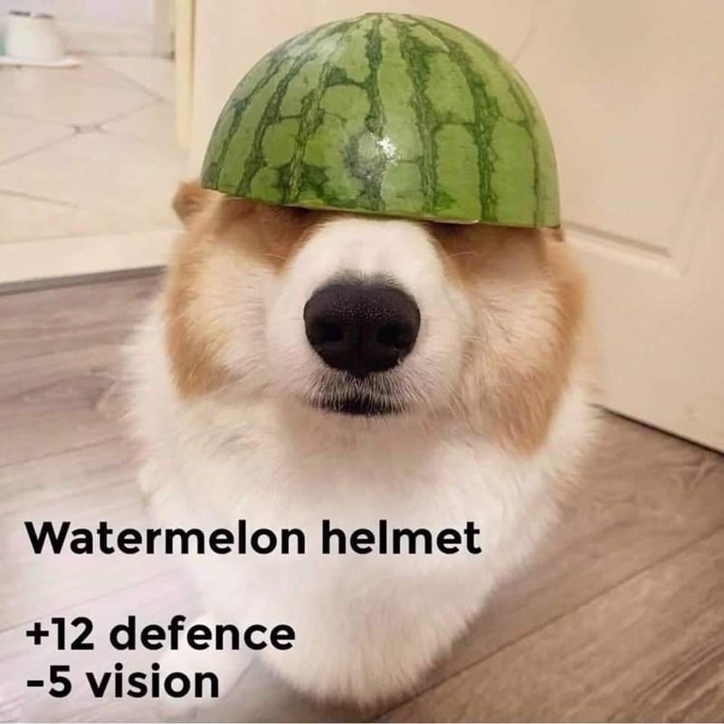 Dog - Watermelon helmet +12 defence -5 vision