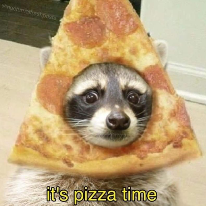 Dog - @nocturnaltrashposts it's pizza time