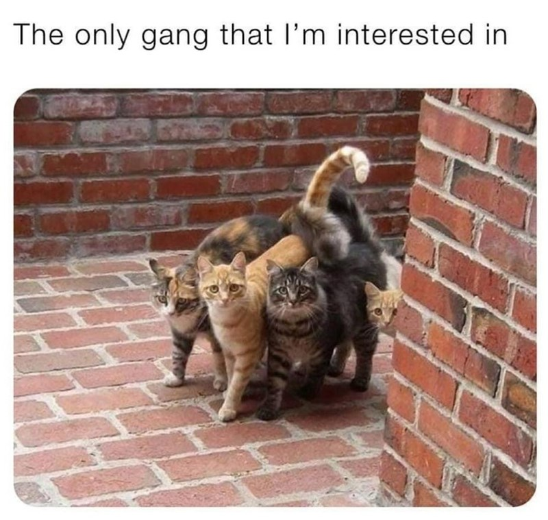 Cat - The only gang that l'm interested in