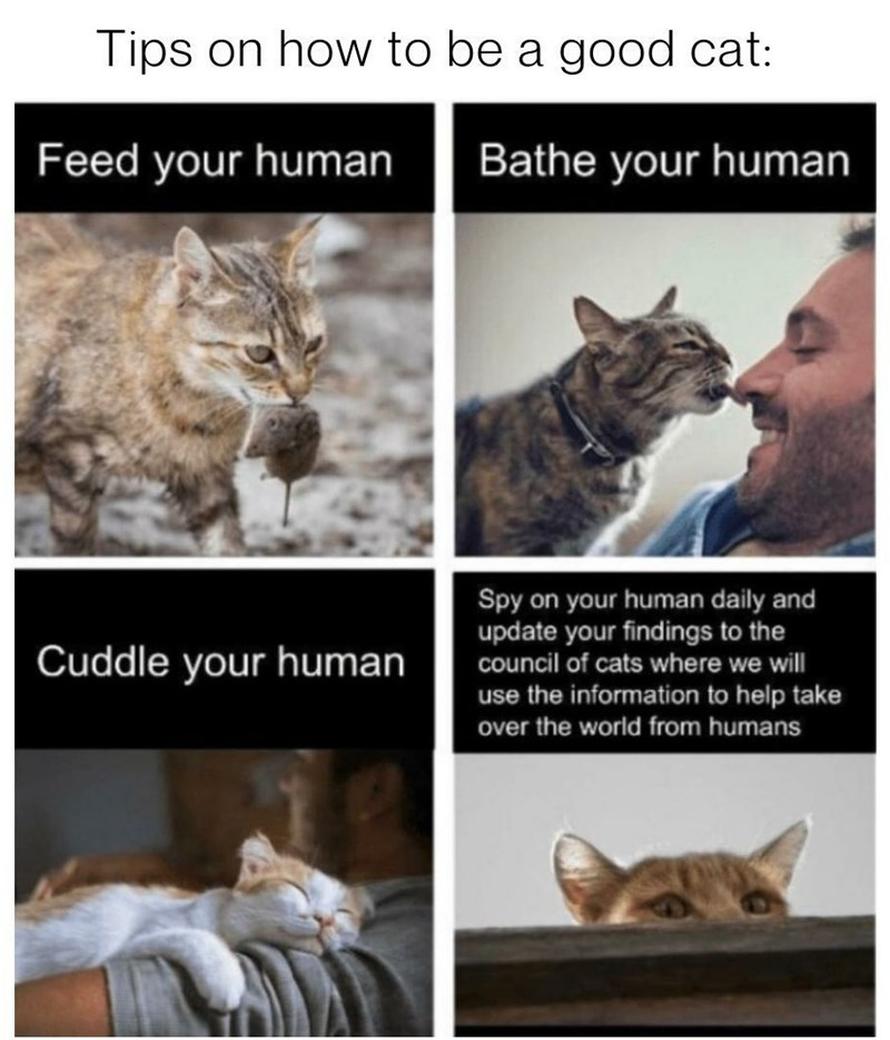 Cat - Tips on how to be a good cat: Feed your human Bathe your human Spy on your human daily and update your findings to the Cuddle your human council of cats where we will use the information to help take over the world from humans