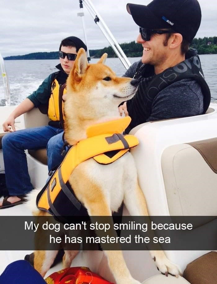 Dog - BUONG My dog can't stop smiling because he has mastered the sea