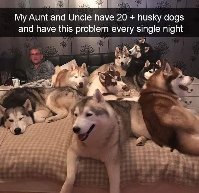 Dog - My Aunt and Uncle have 20 + husky dogs and have this problem every single night