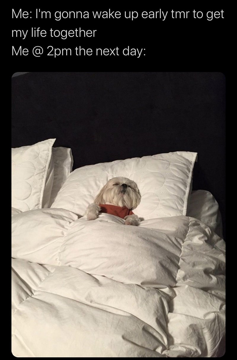 Comfort - Me: I'm gonna wake up early tmr to get my life together Me @ 2pm the next day: