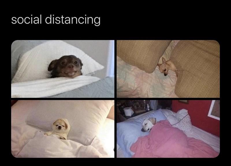 Vertebrate - social distancing
