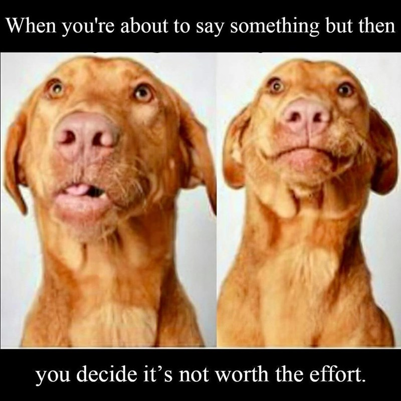 Dog - When you're about to say something but then you decide it's not worth the effort.