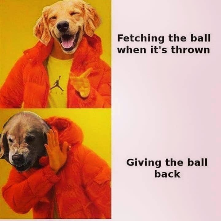 Dog - Fetching the ball when it's thrown Giving the ball back