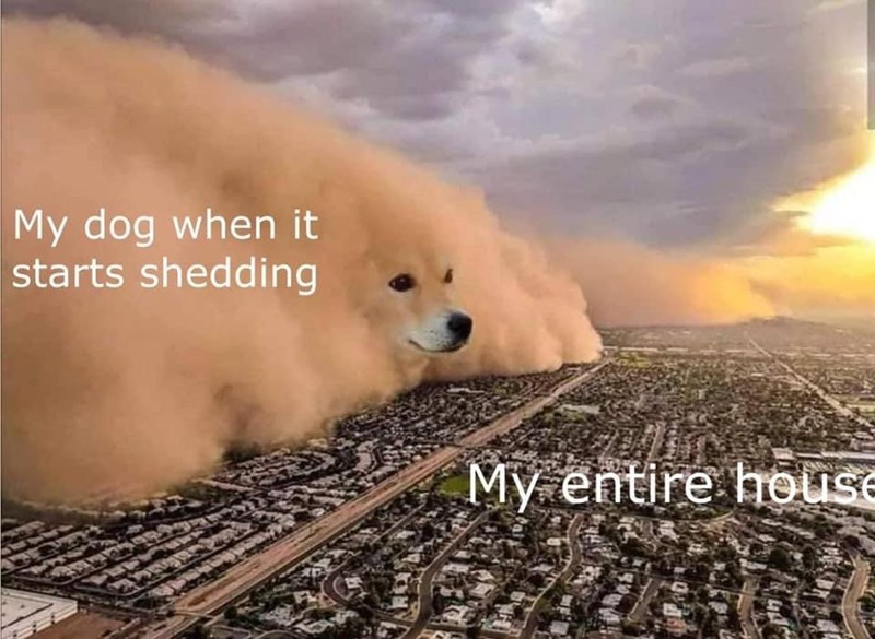 Cloud - My dog when it starts shedding My entire house