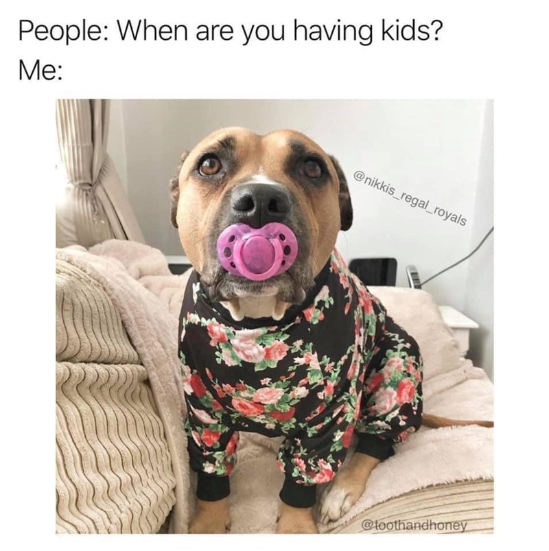 Dog - People: When are you having kids? Me: @nikkis_regal_royals @toothandhoney