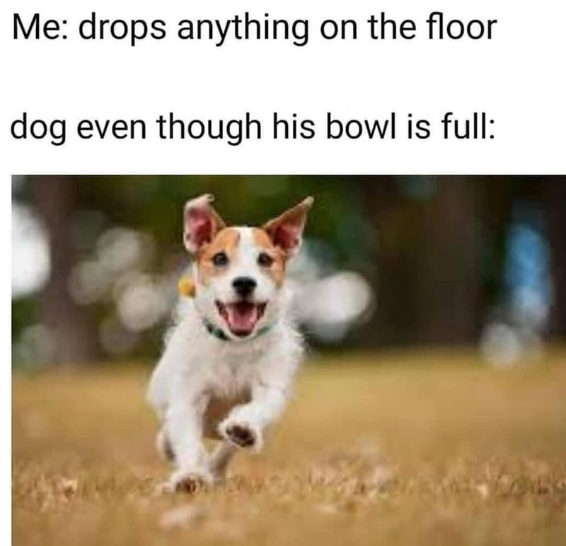 Dog - Me: drops anything on the floor dog even though his bowl is full: