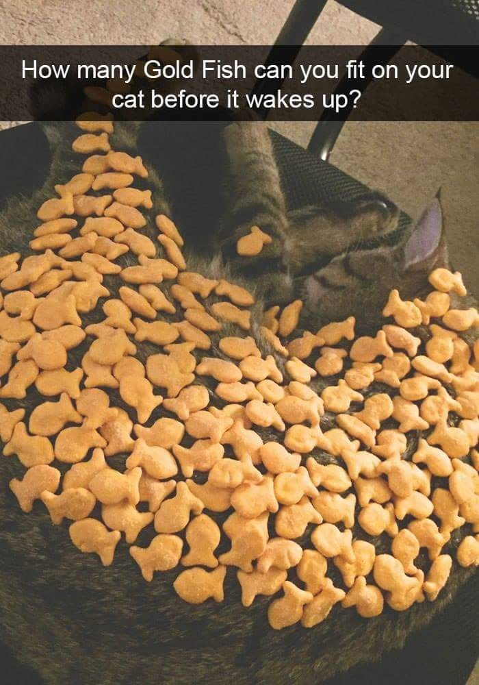Food - How many Gold Fish can you fit on your cat before it wakes up?