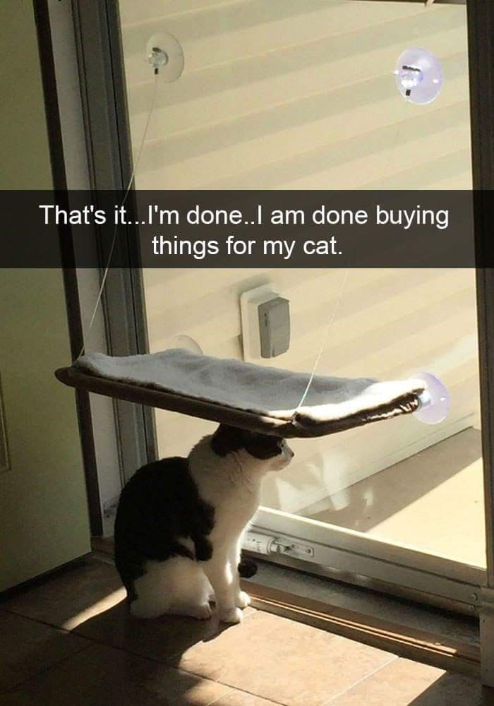 Light - That's it...I'm done..l am done buying things for my cat.
