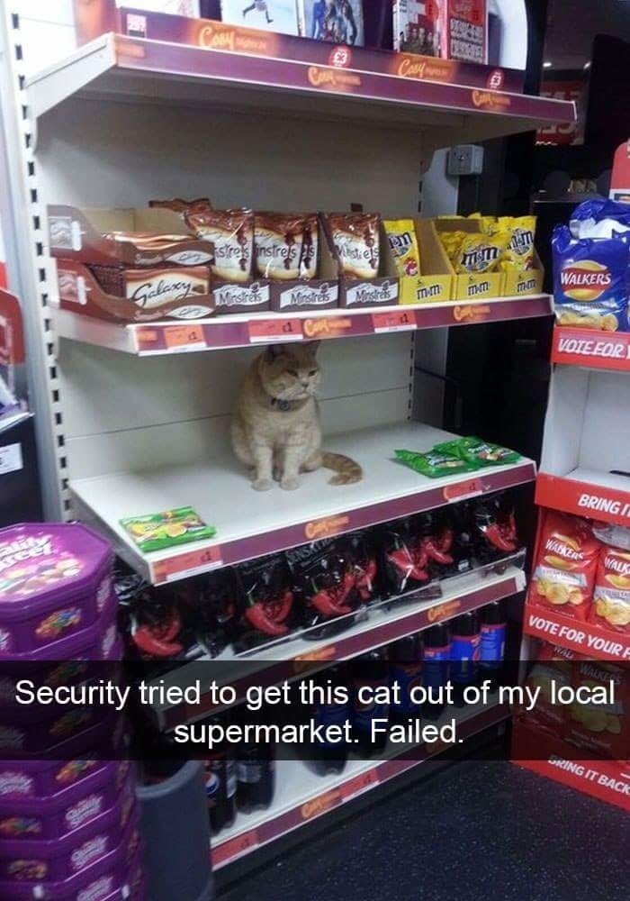 Shelf - CESCERES CA Com Mistiels WALKERS stres instrels mm laxy Mnstres Mrsras Misras VOTE EOR BRINGI WARKERS WALK VOTE FOR YOUR F Security tried to get this cat out of my local supermarket. Failed. RING IT BACK