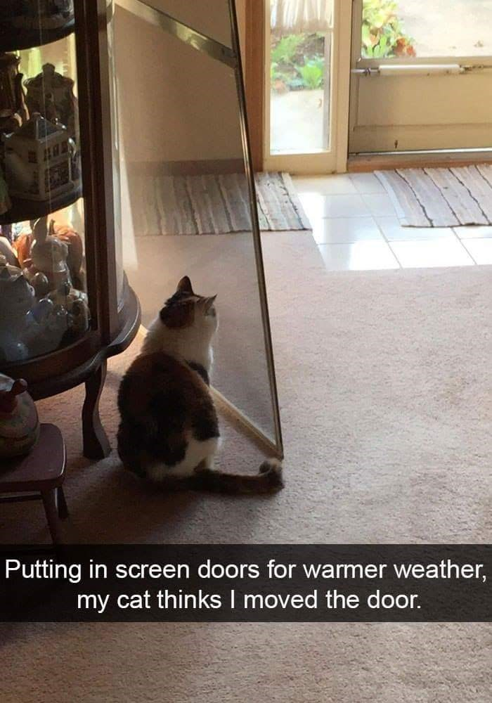 Cat - Putting in screen doors for warmer weather, my cat thinks I moved the door.