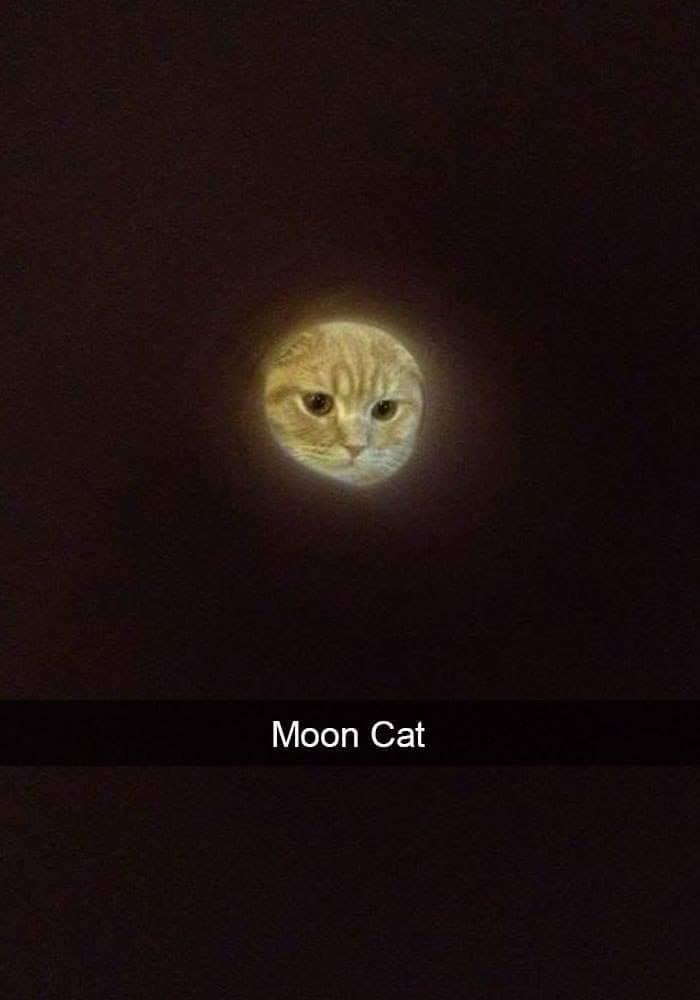 Circle - Moon Cat