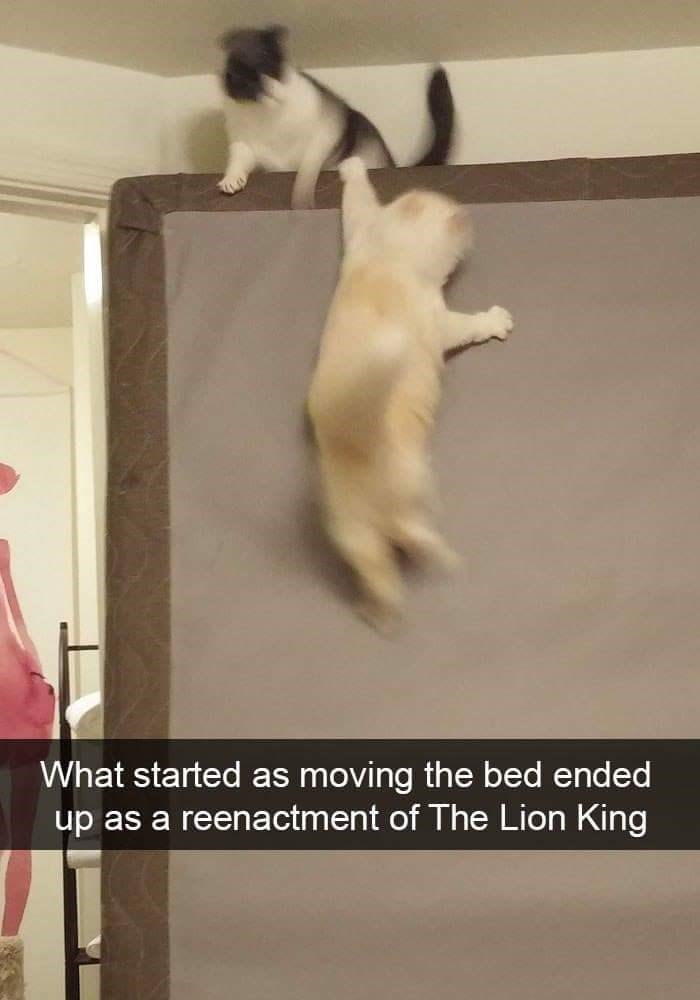 Vertebrate - What started as moving the bed ended up as a reenactment of The Lion King