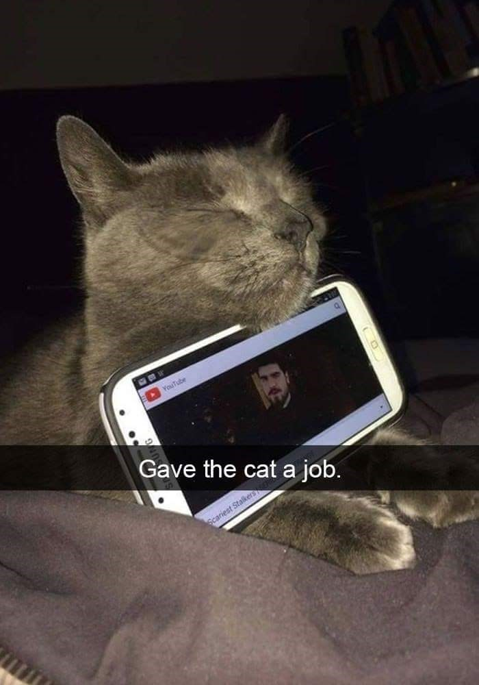Cat - YouTube Gave the cat a job. Scariest Stalkers