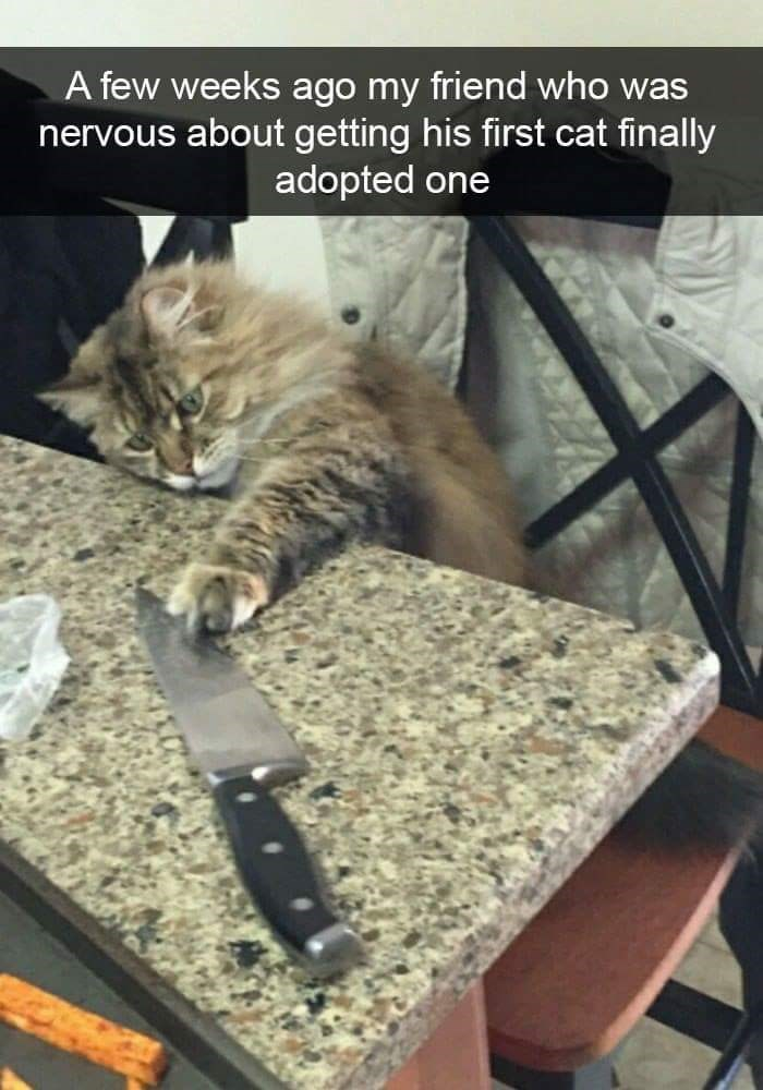 Cat - A few weeks ago my friend who was nervous about getting his first cat finally adopted one