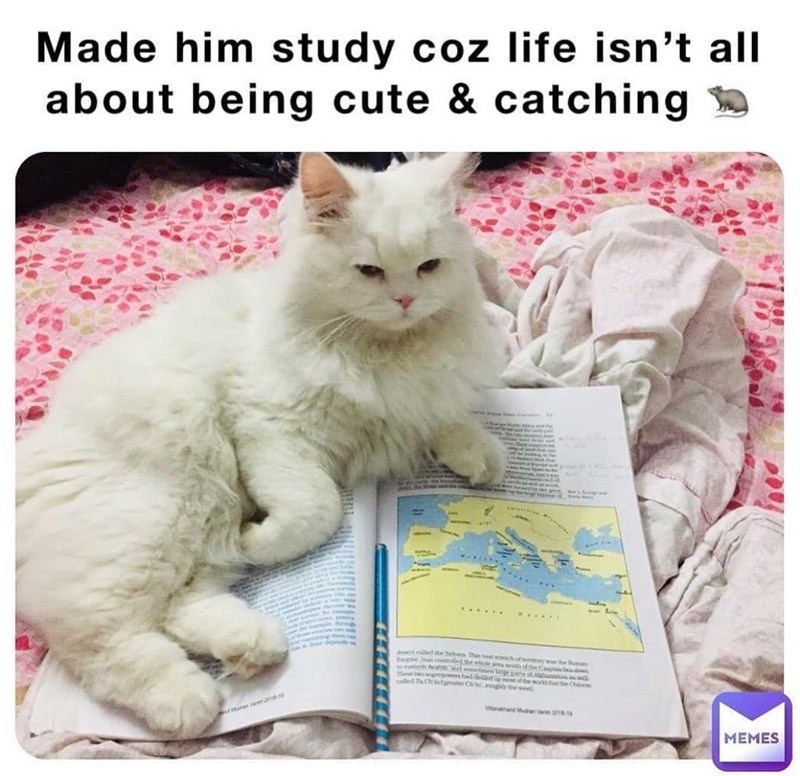 Cat - Made him study coz life isn't all about being cute & catching called esowes hadided teew o .... ...... D....s shes. Doertcaled the Sahars Thin t te ftemon wen the Roman Depue l t ce Ashtsd etiurs largea Thee e Athe whcle ars theCa d Ut n r  МЕMES