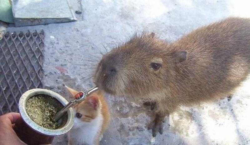 Small animal food