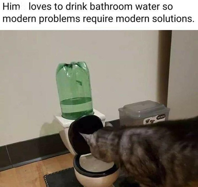 Felidae - Him loves to drink bathroom water so modern problems require modern solutions.