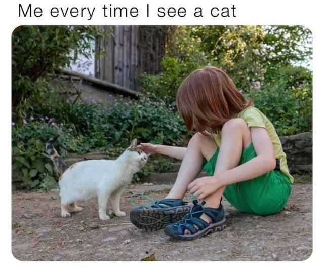Plant - Me every time I see a cat