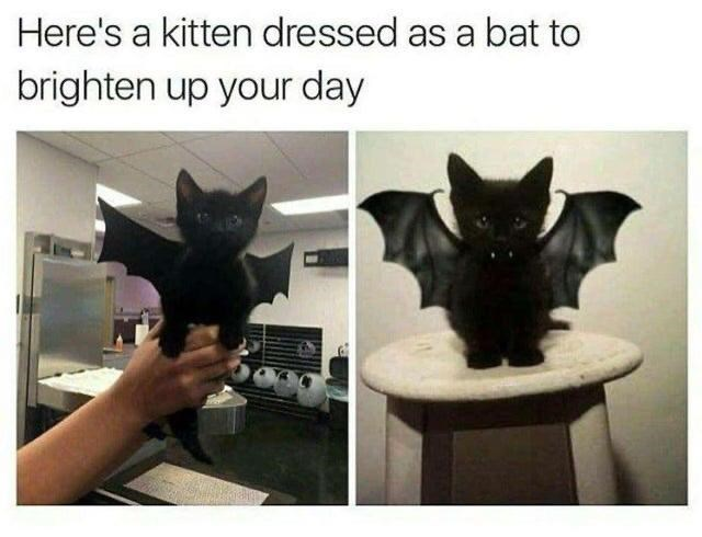 Cat - Here's a kitten dressed as a bat to brighten up your day