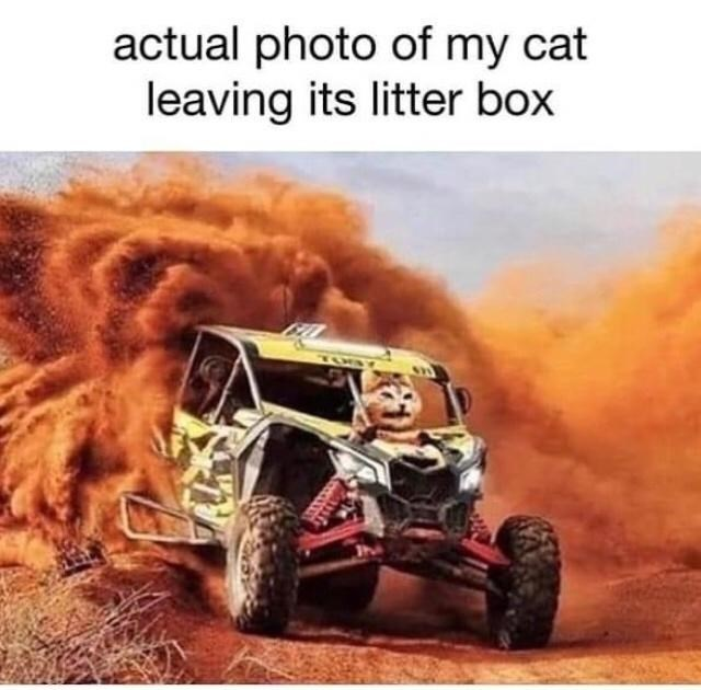 Tire - actual photo of my cat leaving its litter box