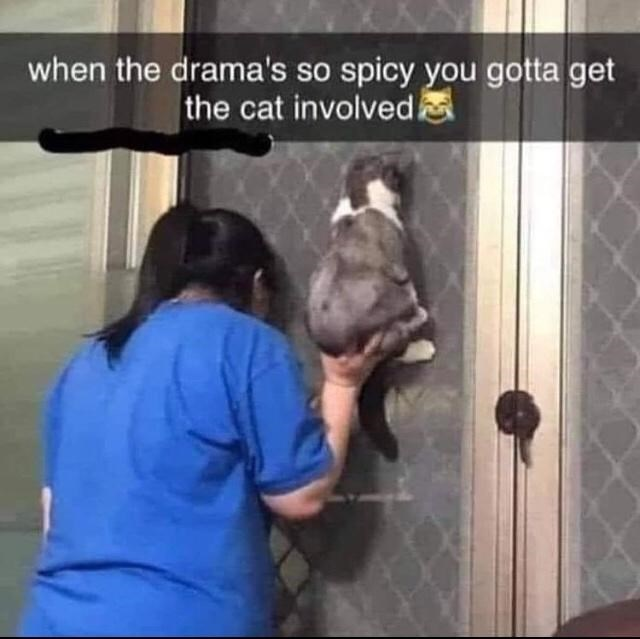 Gesture - when the drama's so spicy you gotta get the cat involved