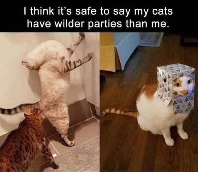 Facial expression - I think it's safe to say my cats have wilder parties than me. कत