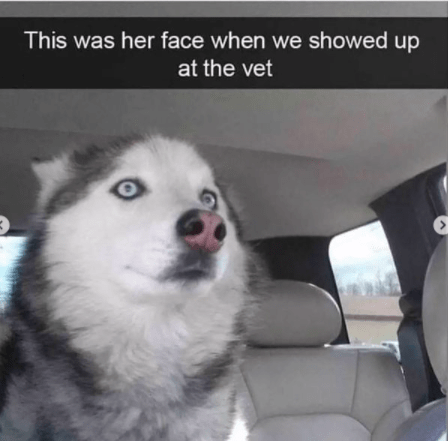 Dog - This was her face when we showed up at the vet <>