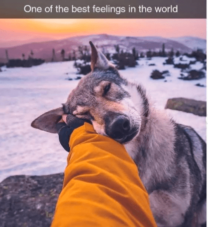 Dog - One of the best feelings in the world