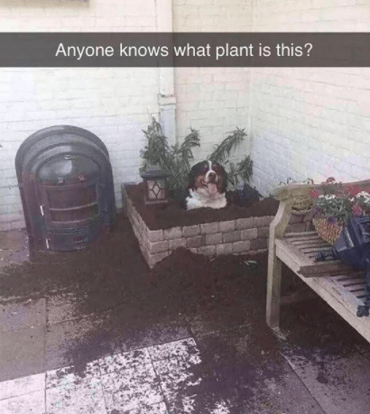 Tire - Anyone knows what plant is this?
