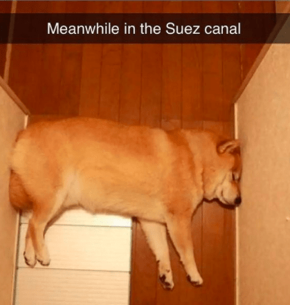 Dog - Meanwhile in the Suez canal