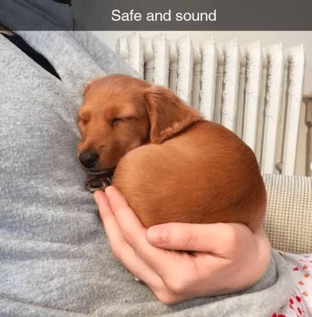 Dog - Safe and sound