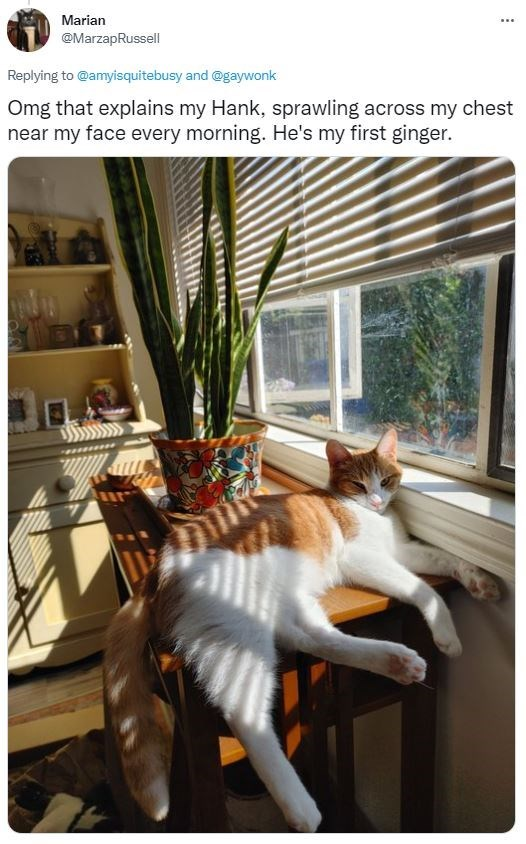 Window - Marian ... @MarzapRussell Replying to @amyisquitebusy and @gaywonk Omg that explains my Hank, sprawling across my chest near my face every morning. He's my first ginger.