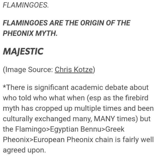 Font - FLAMINGOES. FLAMINGOES ARE THE ORIGIN OF THE PHEONIX MYTH. MAJESTIC (Image Source: Chris Kotze) *There is significant academic debate about who told who what when (esp as the firebird myth has cropped up multiple times and been culturally exchanged many, MANY times) but the Flamingo>Egyptian Bennu>Greek Pheonix>European Pheonix chain is fairly well agreed upon.