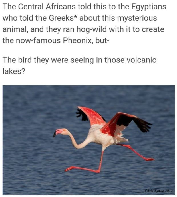 Water - The Central Africans told this to the Egyptians who told the Greeks* about this mysterious animal, and they ran hog-wild with it to create the now-famous Pheonix, but- The bird they were seeing in those volcanic lakes? Chris Kotze 2012