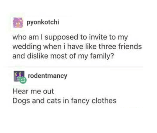 Rectangle - pyonkotchi who am I supposed to invite to my wedding when i have like three friends and dislike most of my family? rodentmancy Hear me out Dogs and cats in fancy clothes