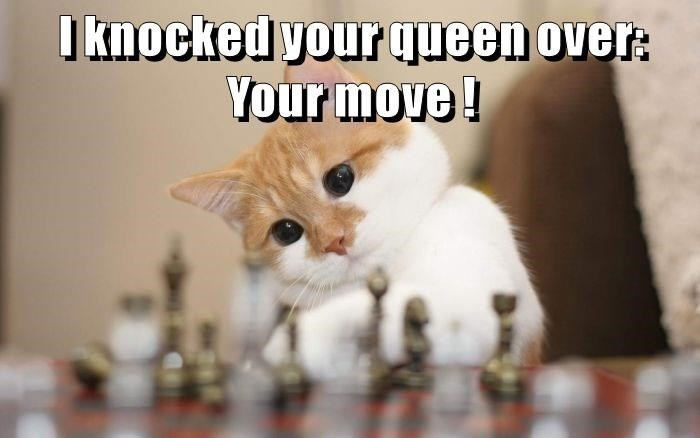 Cat - I knockedyourqueen over: Your move!