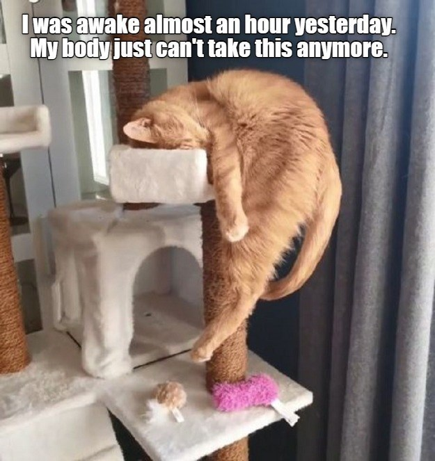 Cat - I was awake almost an hour yesterday. My body just can't take this anymore.