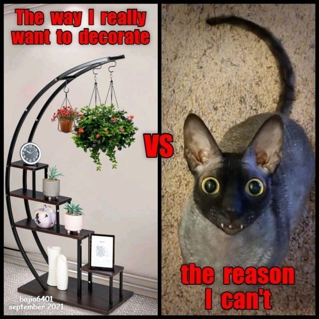 Cat - The way I really want to decorate VS O O the reason I cant bajio6401 september 2021